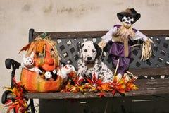 Dalmatian щенок с заплатой в украшении Halloween Стоковое фото RF