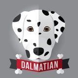 dalmatian Fotografia Stock Libera da Diritti
