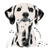 Dalmatian and blots the dog`s head. White background stock illustration