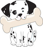 Dalmatian with Bone Stock Photos
