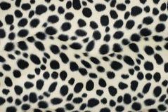 Dalmatian de la piel foto de archivo