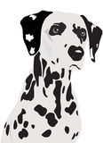 Dalmatian Dog. A classic dalmation dog  illustration Stock Image