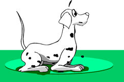 Dalmatian Dog Stock Photos