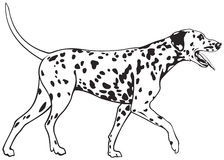 Dalmatian Dog. Breed, well-loved family pet vector illustration Stock Photography