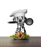 Dalmatian dog chef is preparing chicken Stock Photo