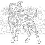 Zentangle dalmatian dog breed. Dalmatian Dog. Coloring Page. Colouring picture. Adult Coloring Book idea. Freehand sketch drawing. Vector illustration Stock Image