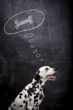 Dalmatian dog dreaming about a bone Royalty Free Stock Photo