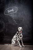 Dalmatian dog dreaming about a bone Royalty Free Stock Photography