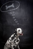 Dalmatian dog dreaming about a bone Stock Image