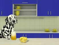 Dalmatian dog drinking beer with chips. In the kitchen Royalty Free Stock Photography