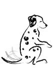 Dalmatian dog gives paw. Royalty Free Stock Photography