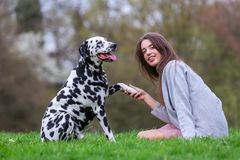 Dalmatian dog gives a young woman the paw. Picture of a Dalmatian dog who gives a young woman the paw Royalty Free Stock Images