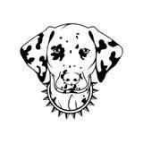Dalmatian dog icon. Stock Photos