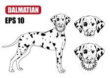 Dalmatian dog icon. Stock Photo