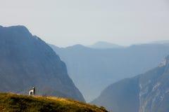 Dalmatian dog on a mountaintop Royalty Free Stock Photography