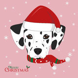 Dalmatian dog with red Santa`s hat Stock Image