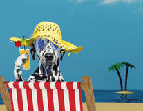 Dalmatian dog relaxing with juice on the beach Royalty Free Stock Photo