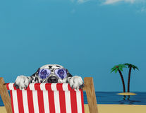 Dalmatian dog relaxing on a red deck chair on the beach Stock Photo