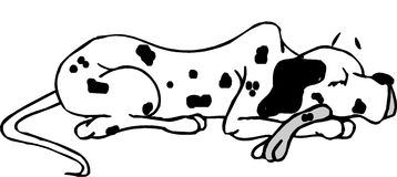 Dalmatian dog sleeping Stock Image