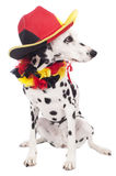Dalmatian dog with soccer hat Royalty Free Stock Images