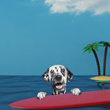 Dalmatian dog surfing on a surfboard at the ocean near the beach. Dalmatian dog surfing on a surfboard at the ocean near the sand beach Stock Images