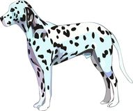 Dalmatian dog. In vector file format available like eps file Stock Photos