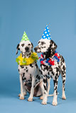 Dalmatian dogs as birthday animals on blue background Stock Photo