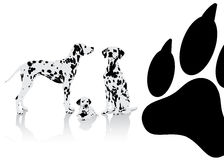 Dalmatian dogs background Royalty Free Stock Photos