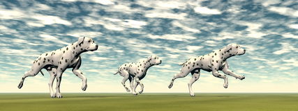 Dalmatian dogs running - 3D render. Three dalmatian dogs running on the green grass by cloudy day Royalty Free Stock Photography