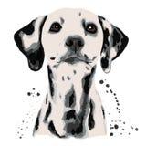 Dalmatian en vlekken het hond` s hoofd stock illustratie