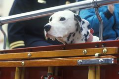 Dalmatian in fire truck, Los Angeles, CA Stock Image