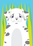 Dalmatian in green grass on blue background. Dalmatian in the grass on blue background Royalty Free Stock Image