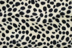 dalmatian hud Arkivfoto