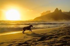 Dalmatian hundspring på kanten av Atlantic Ocean på backgen fotografering för bildbyråer