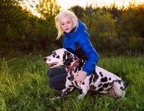 Dalmatian on the hunt Stock Image