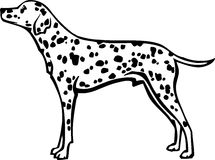 Dalmatian Illustration. Line Art Illustration of a Dalmatian Stock Photography