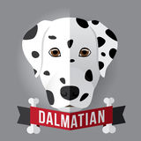 Dalmatian. Image of a dog's face. dalmatian. Vector illustration Royalty Free Stock Photo