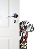 Dalmatian with a leash peeks out from behind the door Royalty Free Stock Photo