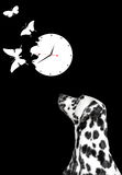 Dalmatian looking at white clock. With butterflies Royalty Free Stock Images