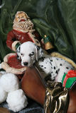 Dalmatian Puppy In Santa's Sleigh 3 royalty free stock image