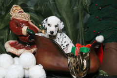Dalmatian Puppy In Santa's Sleigh 4 Stock Photos