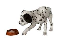 Dalmatian Puppy on White Stock Photo