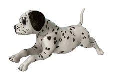 Dalmatian Puppy on White Royalty Free Stock Photo
