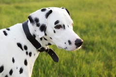 Dalmatian Sky royalty free stock images