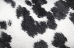 Dalmatian spotted pattern black and white texture. Dalmatians spotted pattern black and white texture Stock Photography