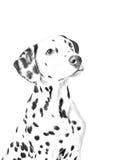 Dalmatian teckning Royaltyfria Bilder