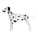 Dalmatian. Vector illustration of dalmatian on white background Royalty Free Stock Photo