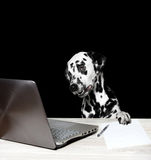 Dalmatian works at the computer. Dalmatian works at the laptop and making notes Royalty Free Stock Image