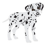 Dalmatians, cute puppy, sad. Vector Illustration Portrait of Dalmatian Puppy. Dog isolated. Stock Photos