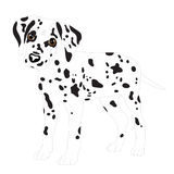 Dalmatians, cute puppy, sad. Vector Illustration Portrait of Dalmatian Puppy. Dog isolated. Royalty Free Stock Photos